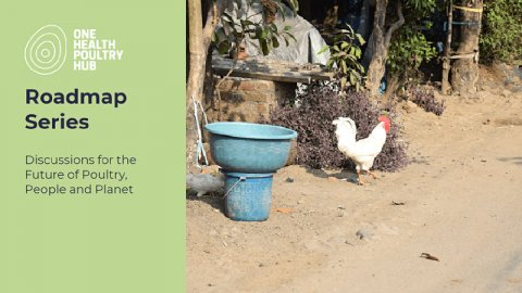 One Health Poultry Hub Roadmap Series: discussions for the future of poultry, people and the planet