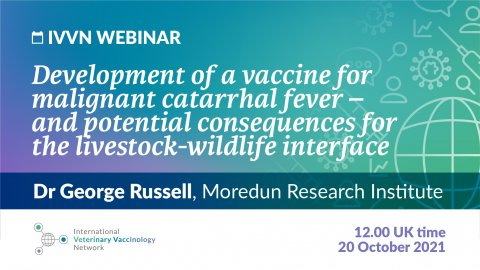 """Graphic with text: """"IVVN Webinar: Development of a vaccine for malignant catarrhal fever – and potential consequences for the livestock-wildlife interface"""""""