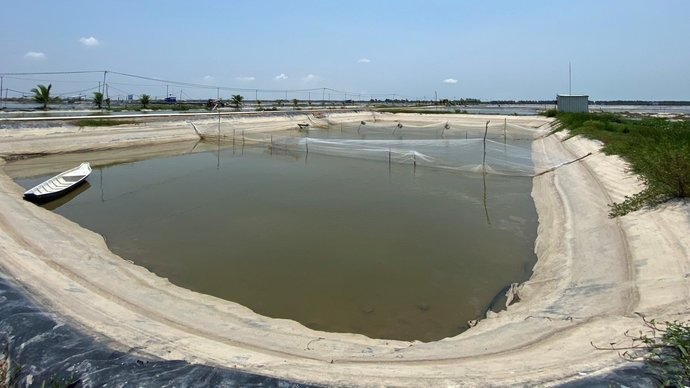 Pangasius pond in Vietnam