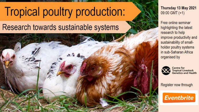 Tropical poultry production
