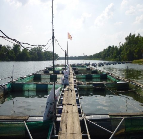 Figure 2 – Trip to tilapia farms on day three of the workshop.