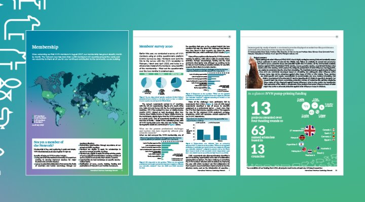 Image containing previews of three pages from the 2020 IVVN Annual Report